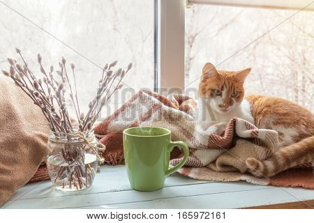 Cup of coffee books branch of willow tree wool blanket and red-white cat on windowsill. In the background snow tree pattern on window. Cozy home concept.