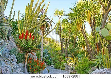 Among Exotic Plants