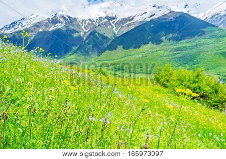 The Wildflowers In Mountains