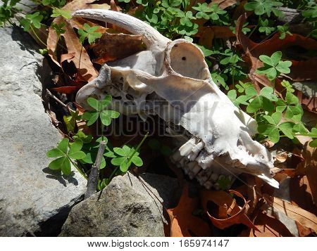 scary sculls and bones in the nature