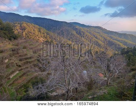 Troodos Mountain View In Cyprus