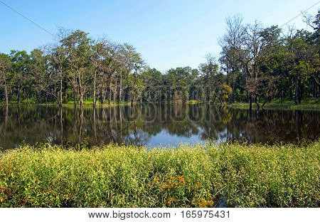 Forest lake wild landscape, Chitwan, Nepal, Asia