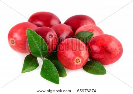 Cranberries close-up. Ripe cranberry with leaves isolated on white