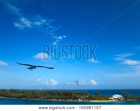 A seagull flying in the air in the bahamas