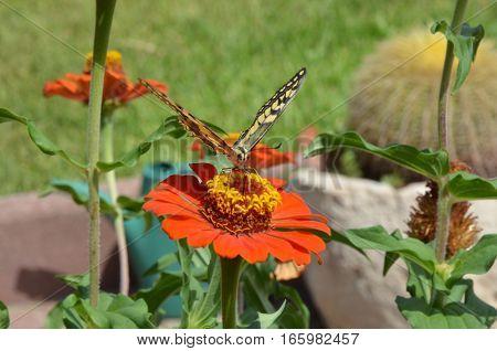 Closeup butterfly on flower in the garden