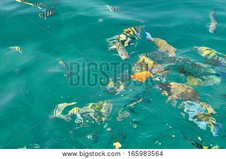 Fishes Being Fed In Cartagena