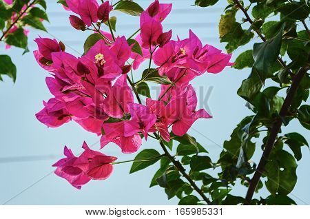 A beautiful flower in Villavicencio Meta Colombia.