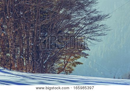 Peaceful rural scenery with deciduous leafless forest edge on a sunny winter day.