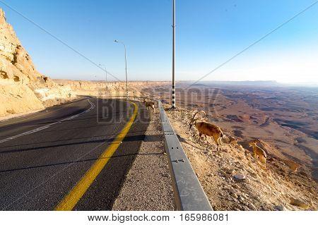 Mountain Desert Road, Ramon Crater, Ibex