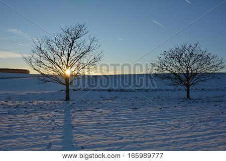 Two trees at the sundown in winter with snow
