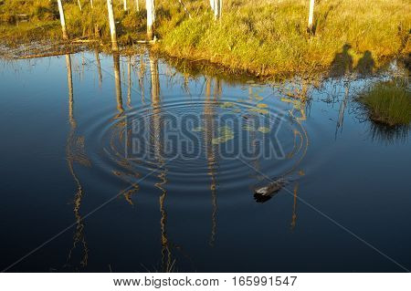 Landscape image with dead calm water reflections and a ripple refelecting dead trees trunks. Two people hand in hand shadow.