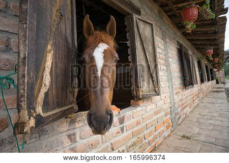 horse with head out on stable window in Cuenca Ecuador