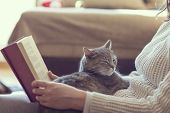 Soft cuddly tabby cat lying in its owner's lap enjoying and purring while the owner is reading a book. Focus on the cat; warm cozy domestic atmosphere selective focus poster