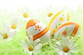 Easter eggs with daisy on grass,Closeup.