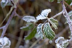 Closeup image of frozen leaves with a frozen water drop.