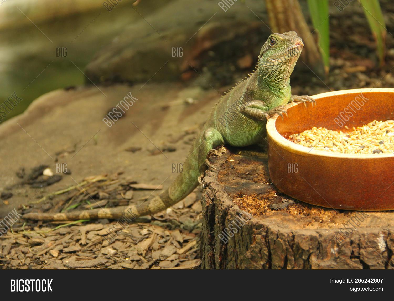 Chinese Water Dragon Image Photo Free Trial Bigstock