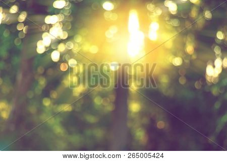 Warm Yellow Bokeh Light Through Blurred Tree, Abstract Nature Background