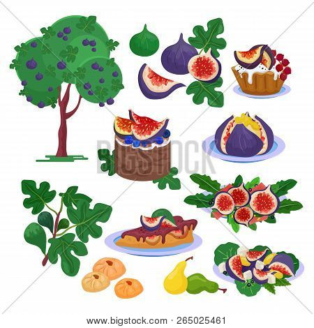 Fig vector fresh fruity food and ripe figs healthy organic sweet dessert illustration freshness set of fig tree with leaves and exotic natural fruit diet isolated on white background poster