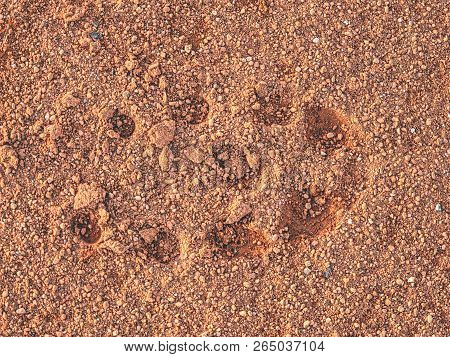Footprint Of Soccer Shoe In Tennis Court Surface. Deep Marks In Detail With A Sport Shoe Footprint O