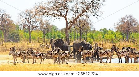 Panoramic View Of A Waterhole On The Makololo Plains With Elephants And Zebras Congregating In The H