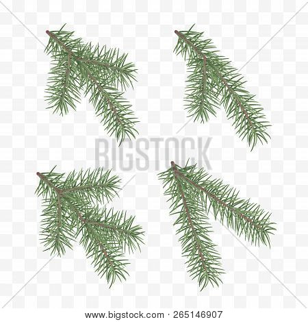 Set Of Realistic Fir Branches. Christmas Tree Or Pine. Conifer Branch Symbol Of Christmas And New Ye