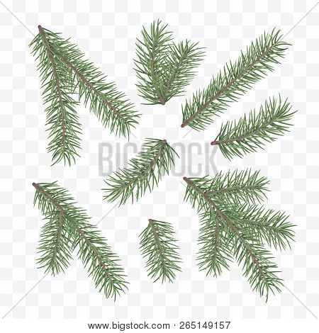 Green Fir Branches. Holiday Decor Element. Set Of A Christmas Tree Branches. Conifer Branch Symbol O