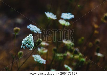 Green Forest Floor Flowering Plants Growing In A Group With A Dark Back