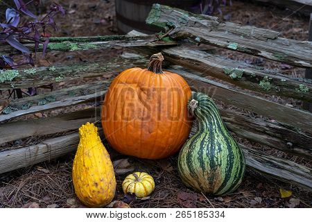 Harvest Pumpkin Sitting In Front Of Fence