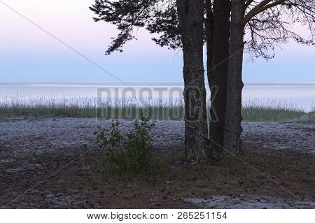 Calm Evening By The Sea. Trees, Reed And Shore This Side. Nightfall And Horizon In The Distance.