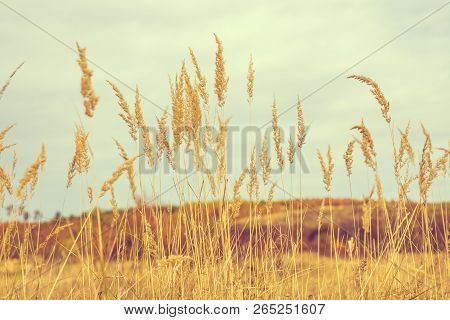 Nature Outdoor Autumn Scene With Yellow Grass