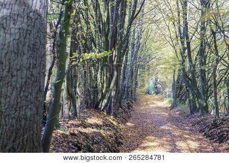 Very Beautiful Tree Avenue In Autumn In Germany