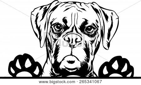 Animal Dog Boxer Vector Photo Free Trial Bigstock
