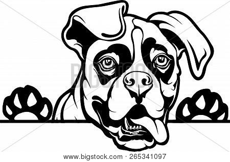 Animal Dog Boxer Rg6h Vector Photo Free Trial Bigstock