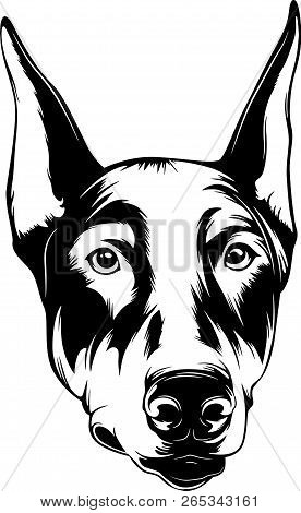 Animal Dog Doberman 5R3D.eps