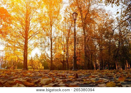 Fall city landscape. Fall trees in sunny fall park lit by sunshine and fallen maple leaves on the foreground. Fall city park scene