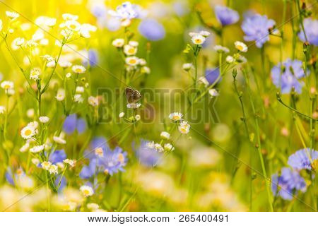 Summer Closeup Flowers And Meadow. Bright Landscape. Inspirational Nature Banner Background. Closeup