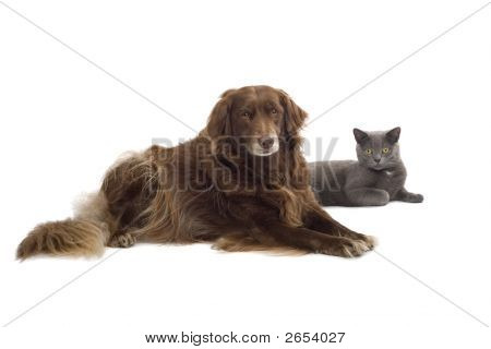 A Brown Dog And A Grey Cat