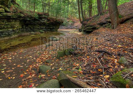 Forest Creek In Autumn