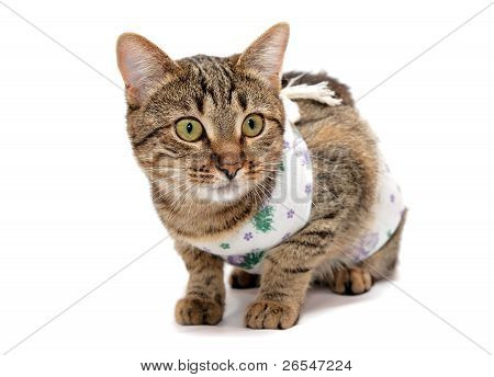 Striped Cat In The Clothes