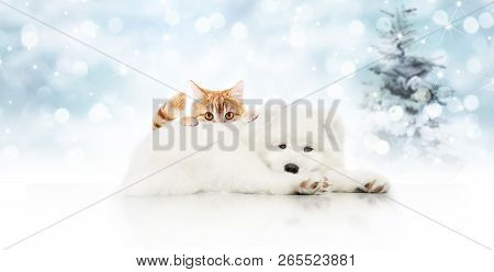 Merry Christmas Signboard Or Gift Card For Pet Shop, White Dog And Ginger Cat Pets Isolated On Blurr