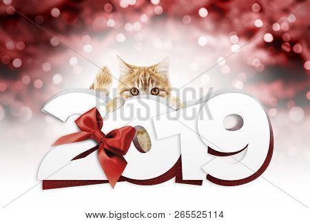 Ginger Cat Showing Happy New Year 2019 Text With Red Ribbon Bow On Blurred Red Christmas Lights, Sig