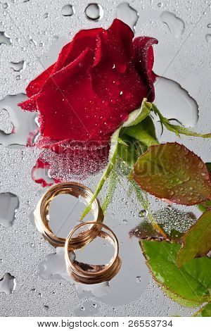 beautiful close-up rose and wedding rings with water drops