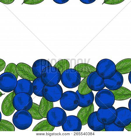 Blueberry. Berries, Leaves. Background, Wallpaper, Texture. Frame, Postcard. Sketch.