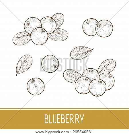 Blueberry. Berries, Leaves. Set. Sketch. On A White Background.