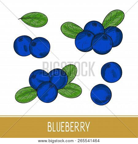 Blueberry. Berries, Leaves. Set. Sketch. On A White Background. Color