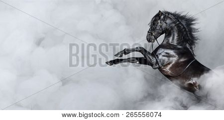 Black Spanish horse rearing in light smoke. Horizontal photo with space for text.