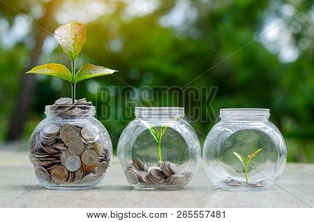 Coin Tree Glass Jar Plant Growing From Coins Outside The Glass Jar On Blurred Green Natural Backgrou