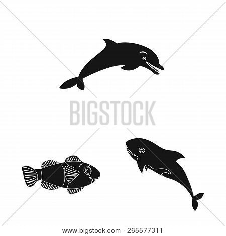 Vector Illustration Of Sea And Animal Icon. Collection Of Sea And Marine Vector Icon For Stock.