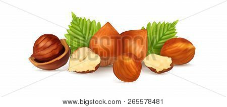 Hazelnuts With Leaves. Photo-realistic Vector Illustration. Fresh Organic Filbert Isolated On White