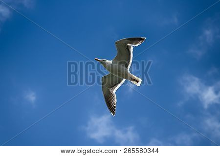 Seagull Flying Against A Blue Sky With Clouds